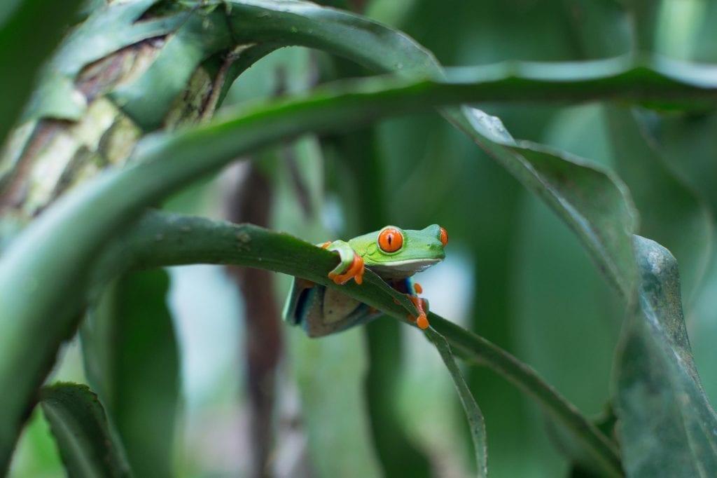 Frog-in-tree-ocean-blue-news