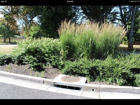 Street drain bioretention cell basin example