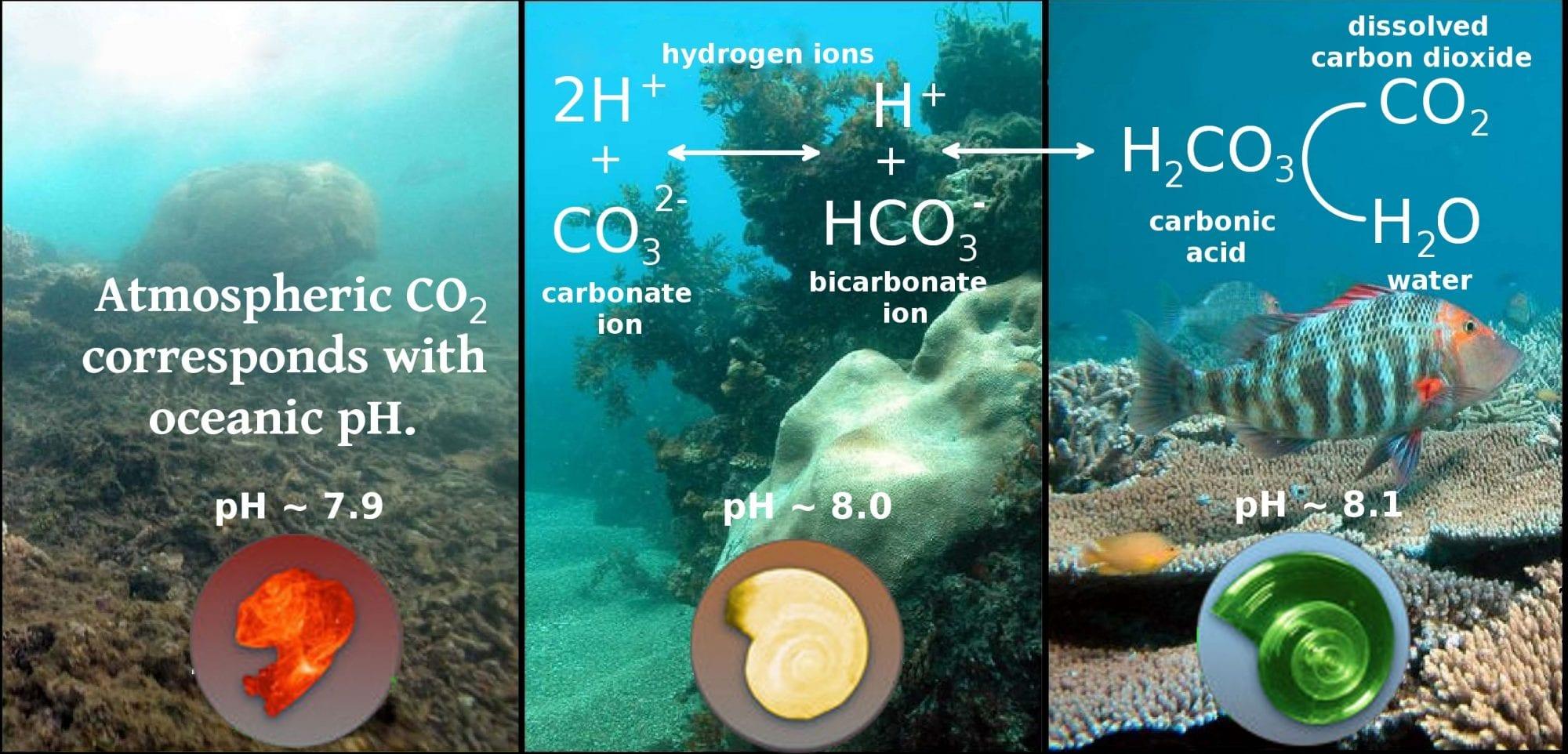 carbon-dioxide-in-the-ocean-grafic.jpg