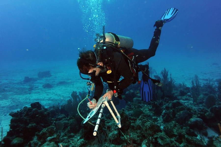 explore-the-ocean-corals.png
