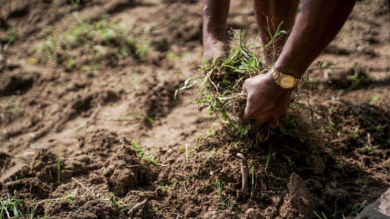 black-farmers-take-on-Monsanto's-cancer.jpg
