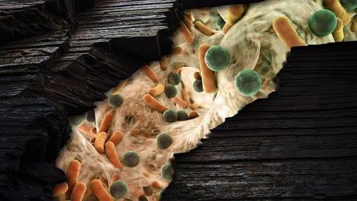Oil pollution spills under  microscope