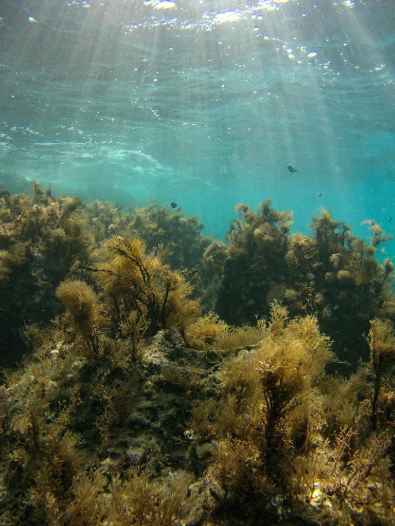 Algae-scaled