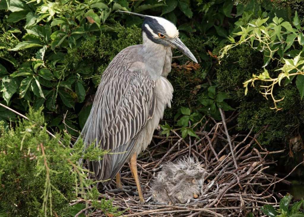 sea-birds-list