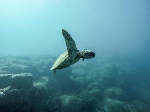 cleaner-oceans