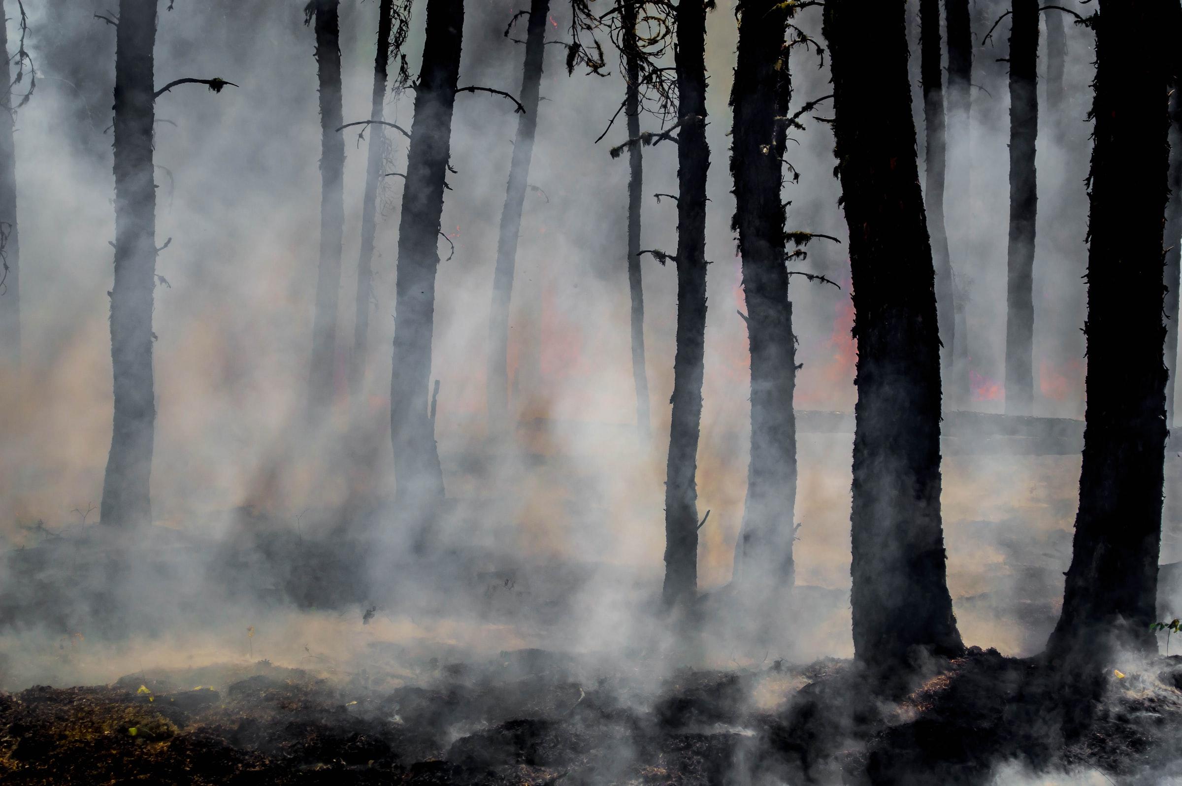burned-tree-trunks