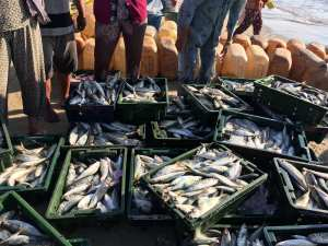 solutions-to-overfishing
