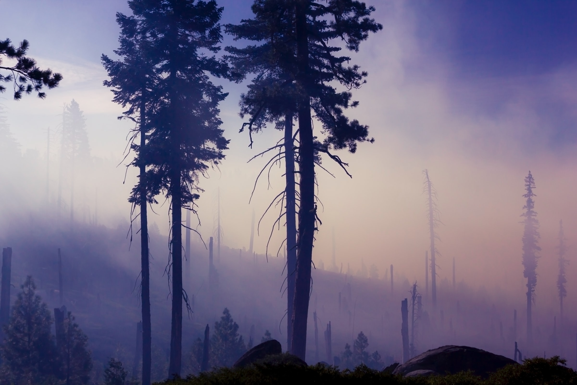take-action-wildfires