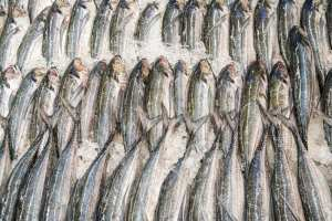 why-is-sustainable-fishing-important
