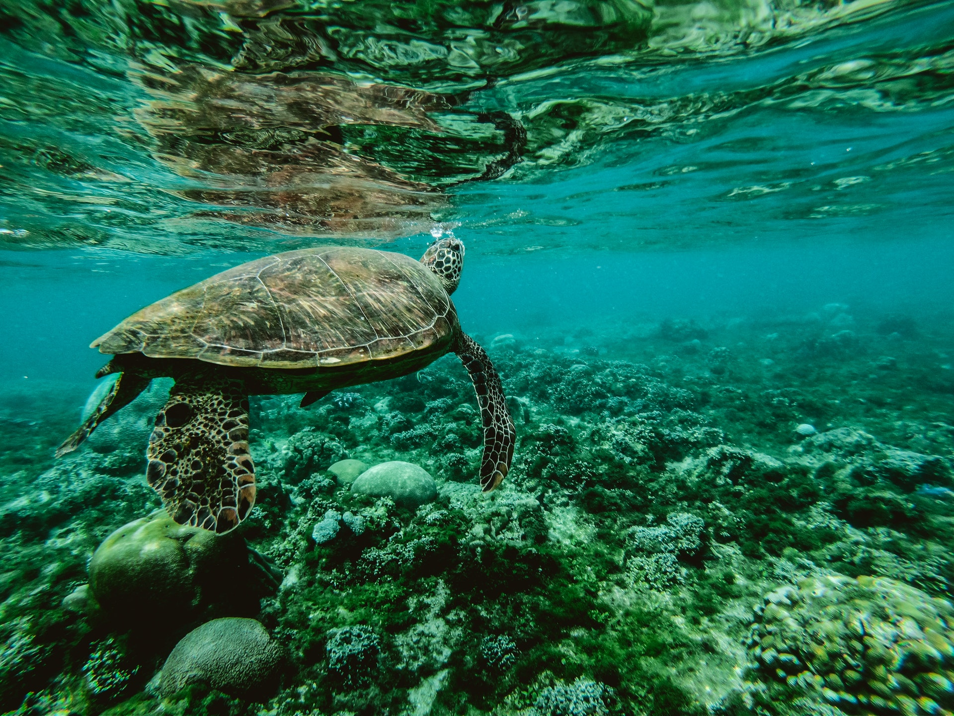 our-oceans-are-vital-for-sustaining-life