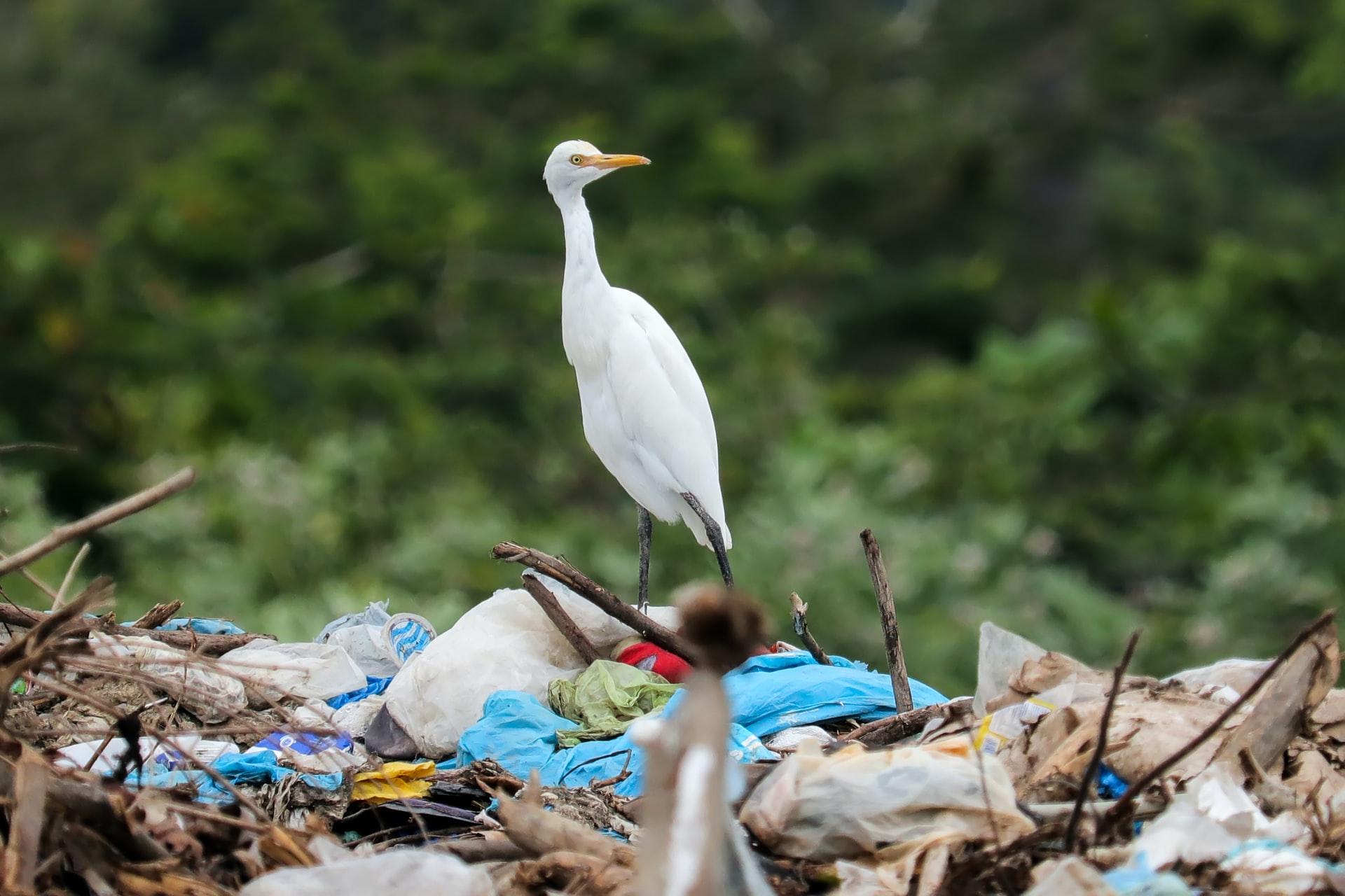 seabirds-need-us-to-cut-out-single-use-plastics