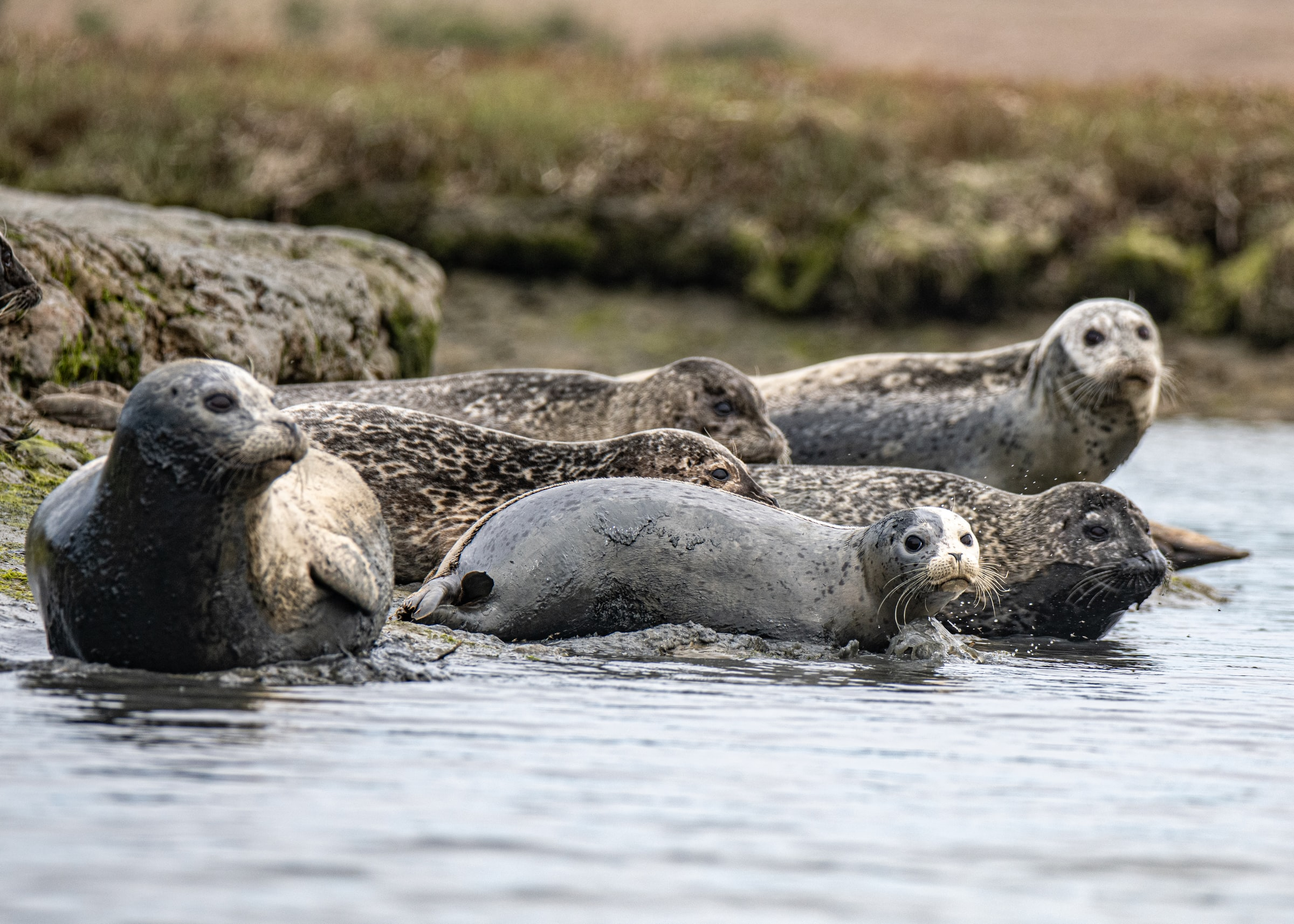 how-has-the-ocean-changed-seals-eat-fish
