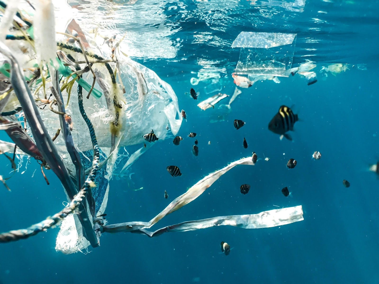 how-does-plastic-enter-the-food-chain