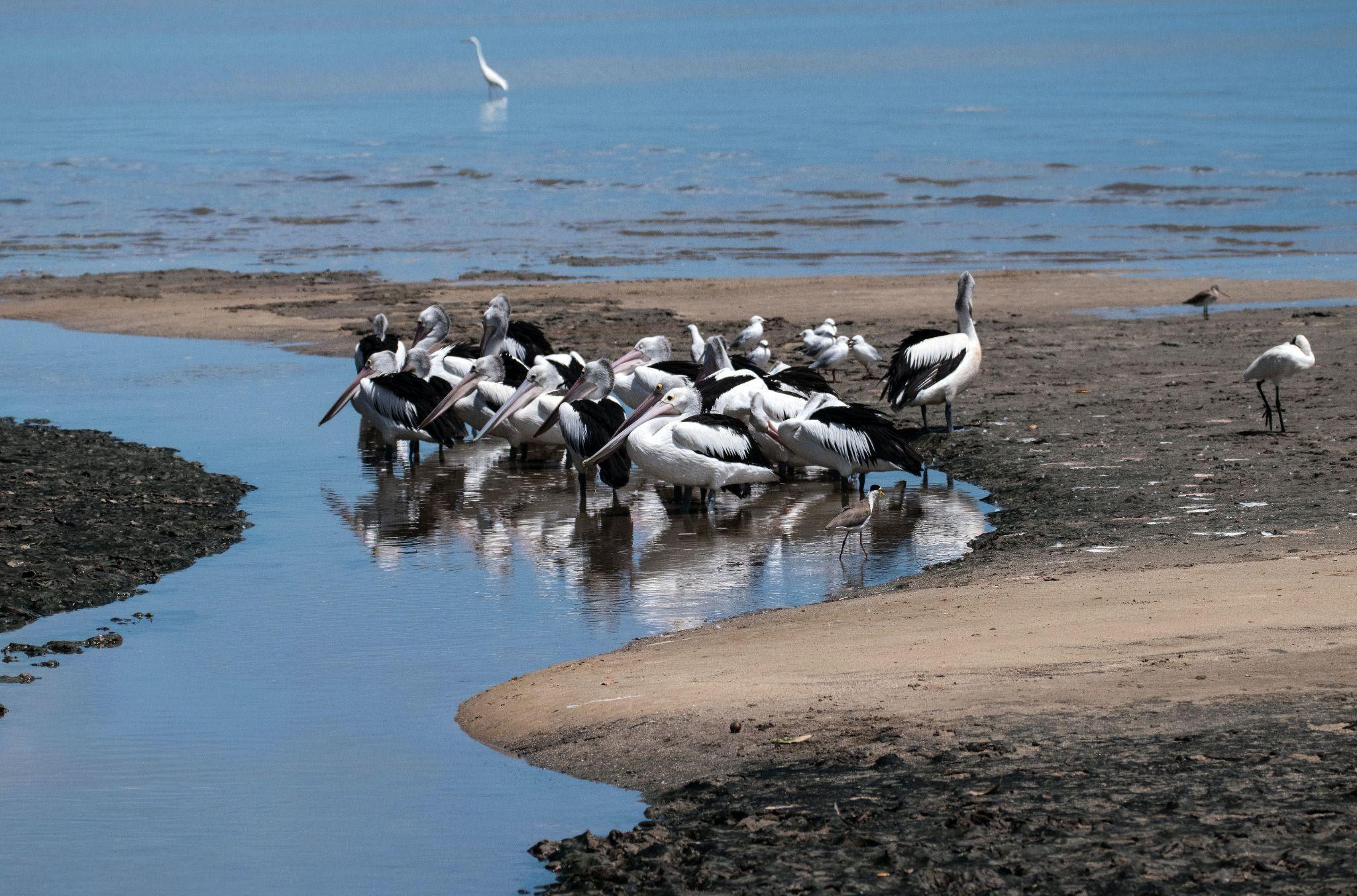 animals-and-estuarine-ecosystems
